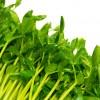 豆苗の栄養と効能は何?保存方法や選び方のコツ!